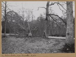 Arbre abattu, non ébranché [Châteauneuf-en-Thymerais ?] | Houdard, Georges (1883-1944). Photographe