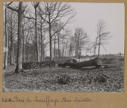 Bois de chauffage. Une clairière [Châteauneuf-en-Thymerais ?]  | Houdard, Georges (1883-1944). Photographe