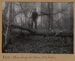 Ebranchage du tronc à la hache [Châteauneuf-en-Thymerais ?] | Houdard, Georges (1883-1944). Photographe