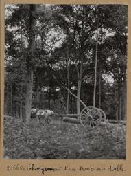 Chargement d'un tronc sur diable [Châteauneuf-en-Thymerais ?] | Houdard, Georges (1883-1944). Photographe