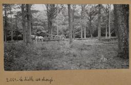 Le diable est chargé [Châteauneuf-en-Thymerais ?]  | Houdard, Georges (1883-1944). Photographe