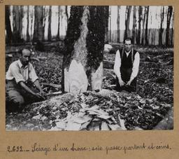 Sciage d'un tronc : scie passe-partout et coins | Houdard, Georges (1883-1944). Photographe