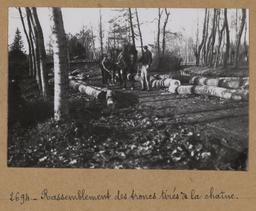 Rassemblement des troncs tirés à la chaîne | Houdard, Georges (1883-1944). Photographe