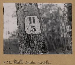 Vieille souche martelée | Houdard, Georges (1883-1944). Photographe
